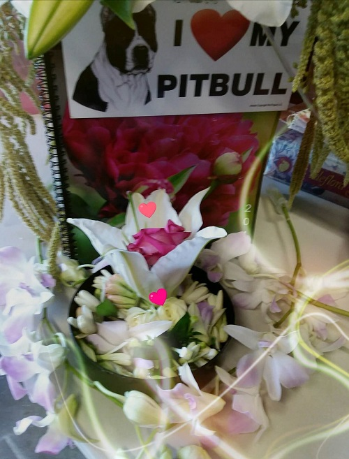 pet sympathy flowers San Diego